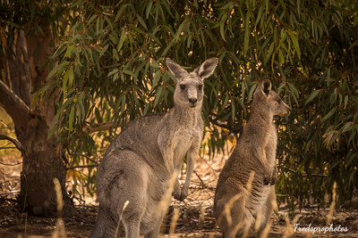 Melbourne - Animal Preserve-8