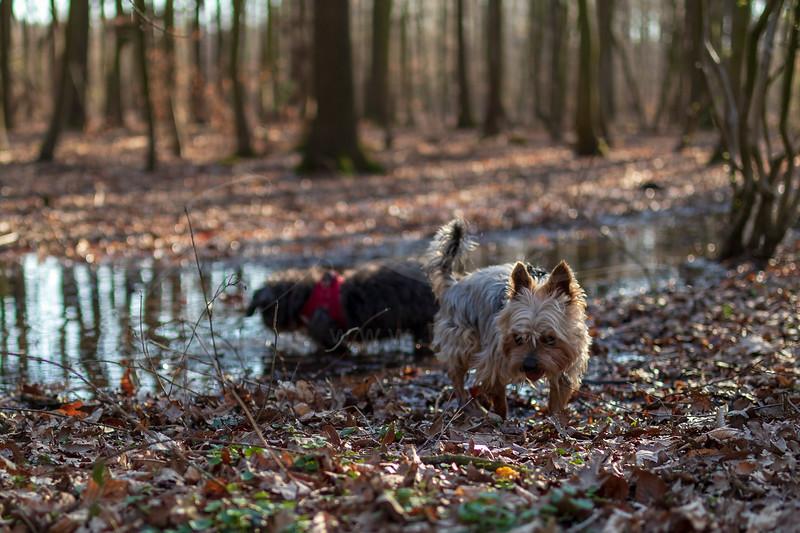 Les chiens prennent un bain | the dogs take a bath