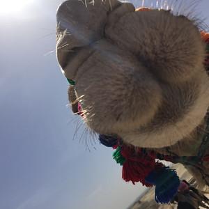 CamelNose