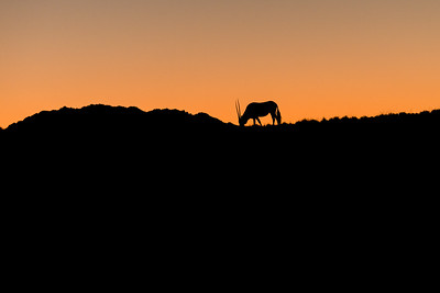 Oryx silhouette