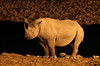 Night rhino at Halali waterhole<br /> Etosha, Namibia