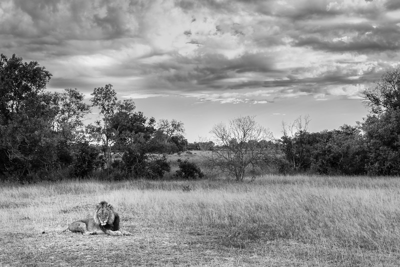 The king in the veld