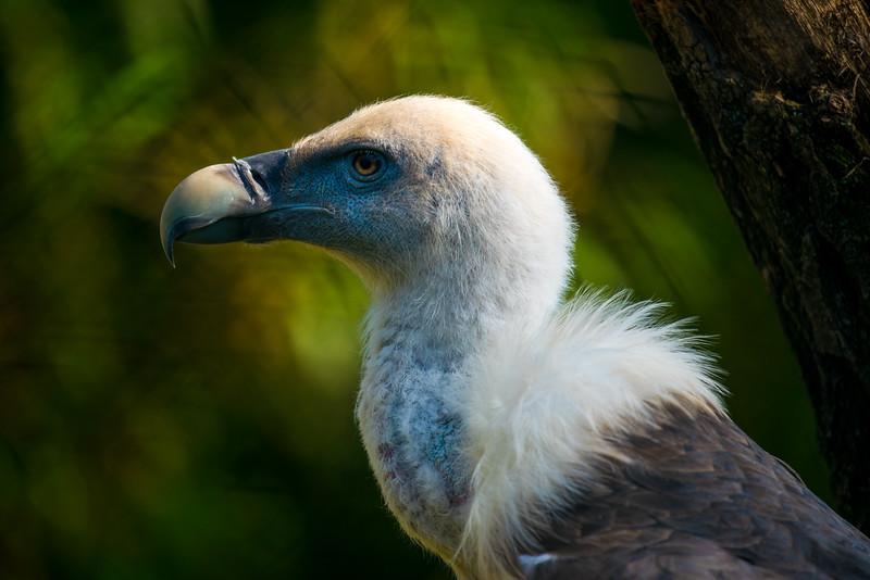 Vulture, checking the neighborhood