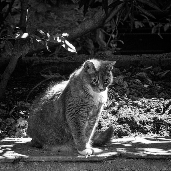 un chat au soleil | a cat in the sunlight