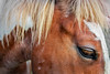 Horse detail 2