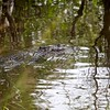 Twin Crocs