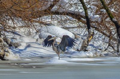 Osprey - River Edge, New Jersey