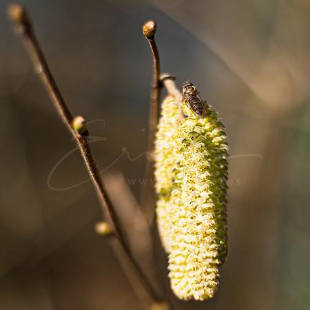 la mouche aime le soleil | the fly likes the sun