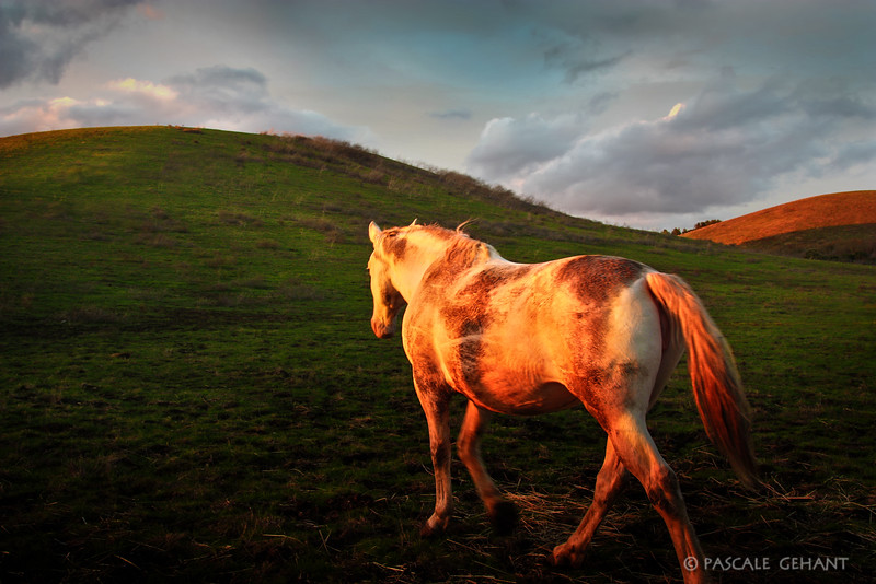 White horse on green hill