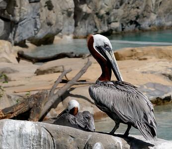 National Zoo - Washington DC