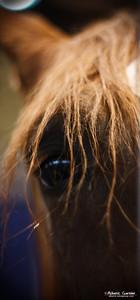 Horse Eye (Equita 2010)