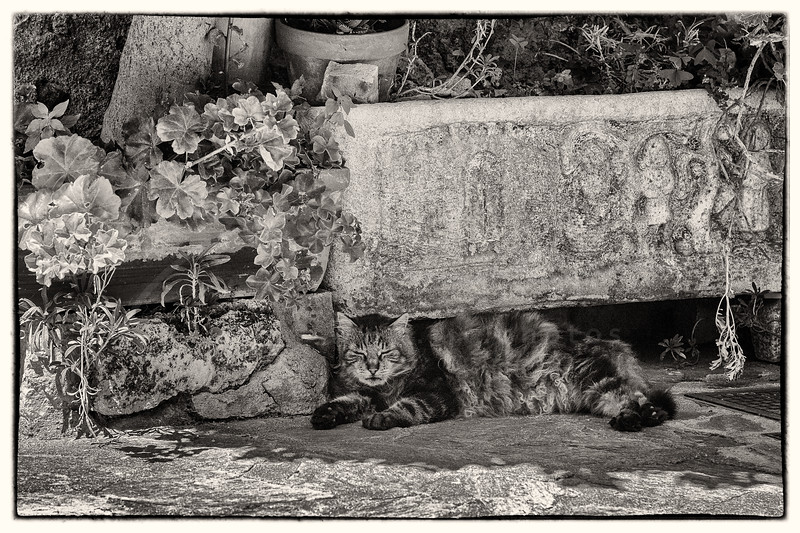un chat à l'ombre | a cat in the shade