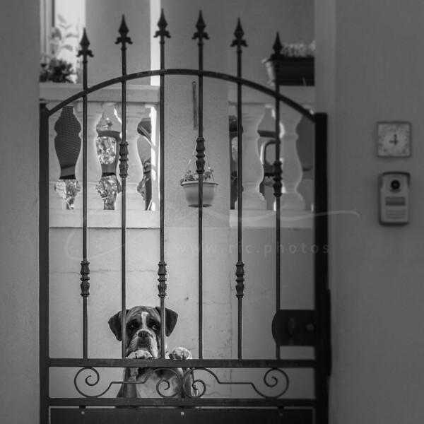 Ici, je regarde - confinement 1km 1h | I guard my home - lockdown 1 km 1 hour