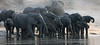 Herd of Elephants on the Chobe River<br /> Botswana