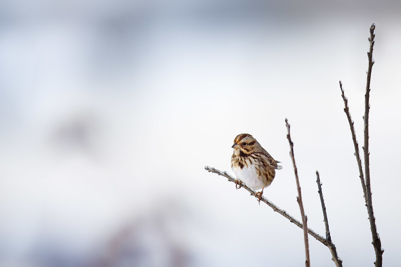 bird with snow background