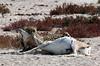 Cheetah kill<br /> Etosha, Namibia