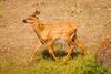 Elk and Calf