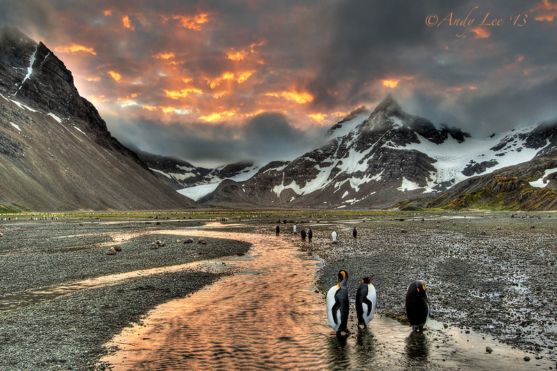 King Penguins at Sunset - 1st Place in 2012 Oregonian Travel Contest<br /> Right Whale Bay, South Georgia Island<br /> GPS  -57.2629,  -63.7980