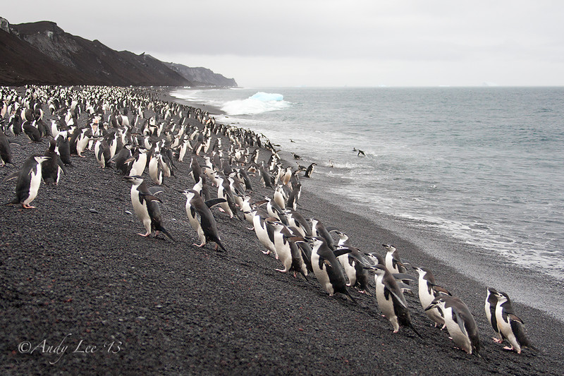 Baily Head, Deception Island, Antarctica
