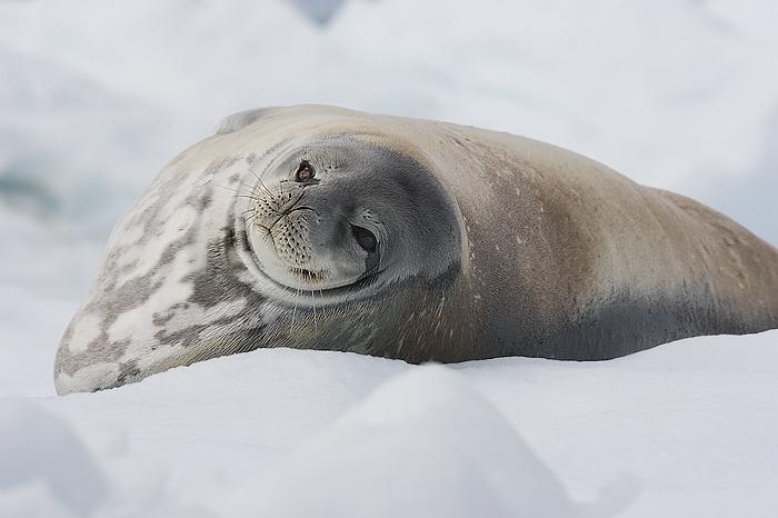 Seal. John Chapman.