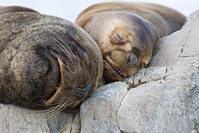 John Chapman. Seals.