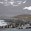 Our first look at the 250,000 colony of King Penguins