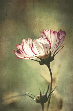 Antique Flora