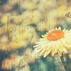 Spring Everlasting