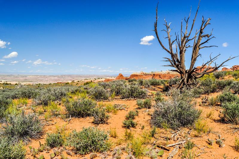 Desert Life & Death