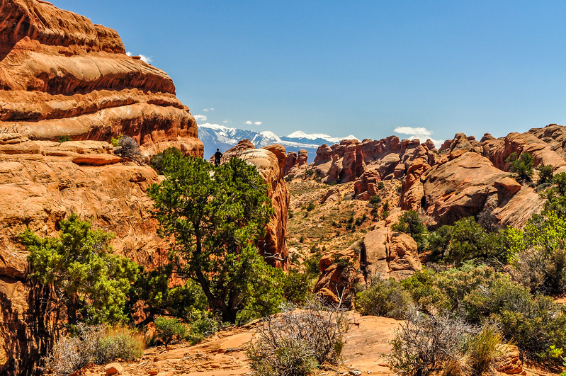 Pines & Monoliths