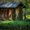 Shaded Shed