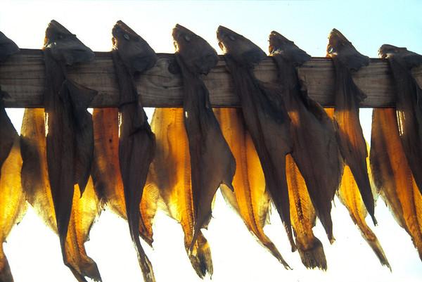 Dried fish, Ilulissat