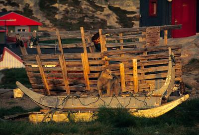 Sledge and Greenland husky