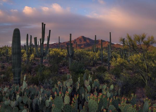 """Eden of the Sonoran""  (2020)"