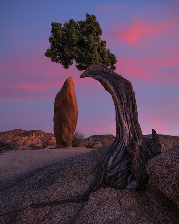 """Desert Zen""  (2020)"