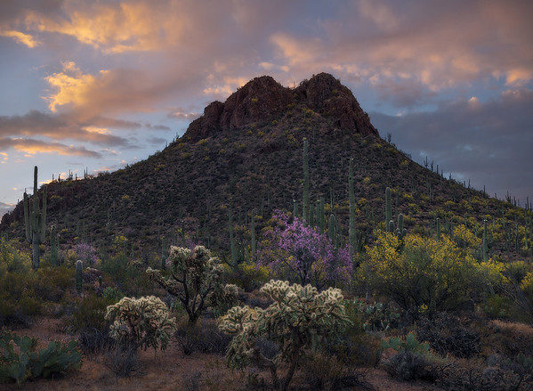 """""""Desert Garden"""" (2020)"""