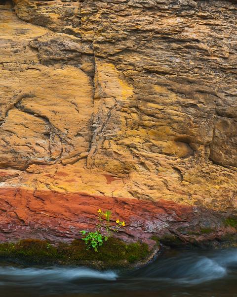 Oak Creek Canyon: Flowers