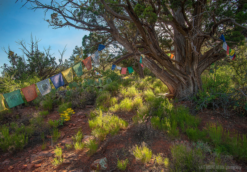Ancient prayer tree on the Sedona stupa land