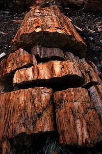Long Logs