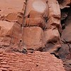 Honanki Cliff Dwelling and Petroglyphs