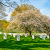 Spring at Arlington National Cemetery