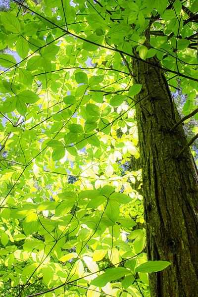 Upward Look Through Bright Green Leaves