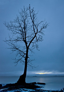 Tybee Tree at Twilight