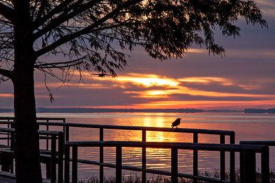 bird sunrise Lake tavares_1739