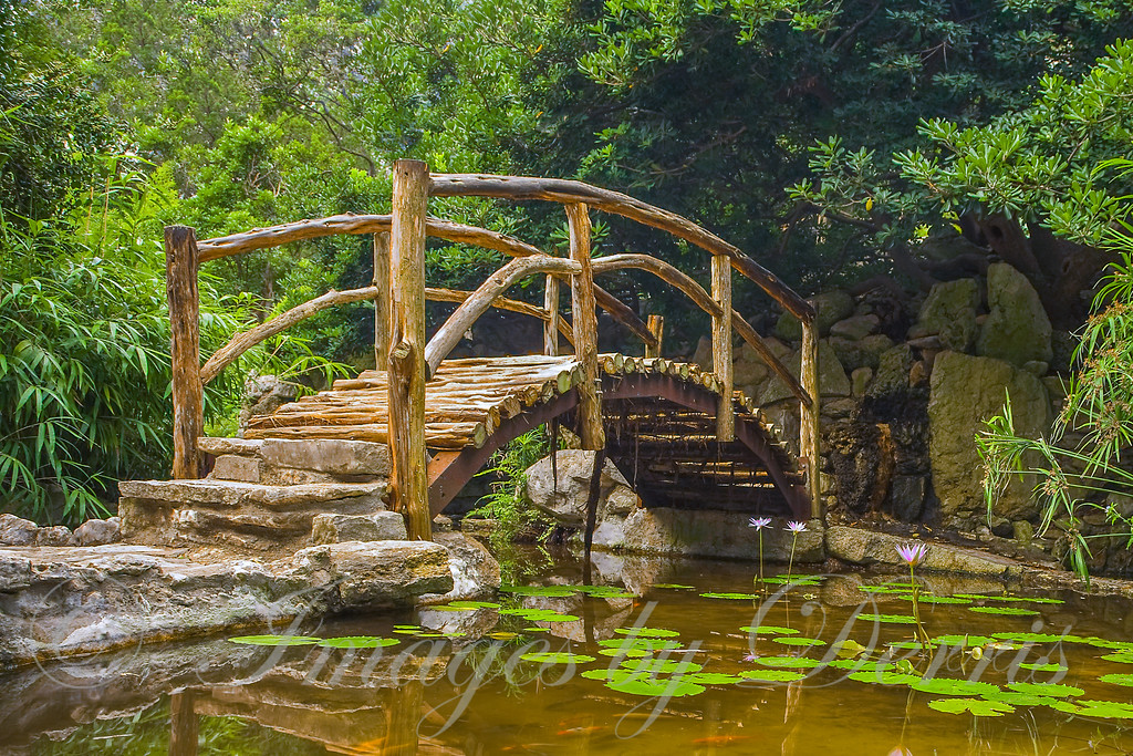 Cedar log Bridge