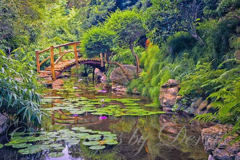 Bridge to the Tropics