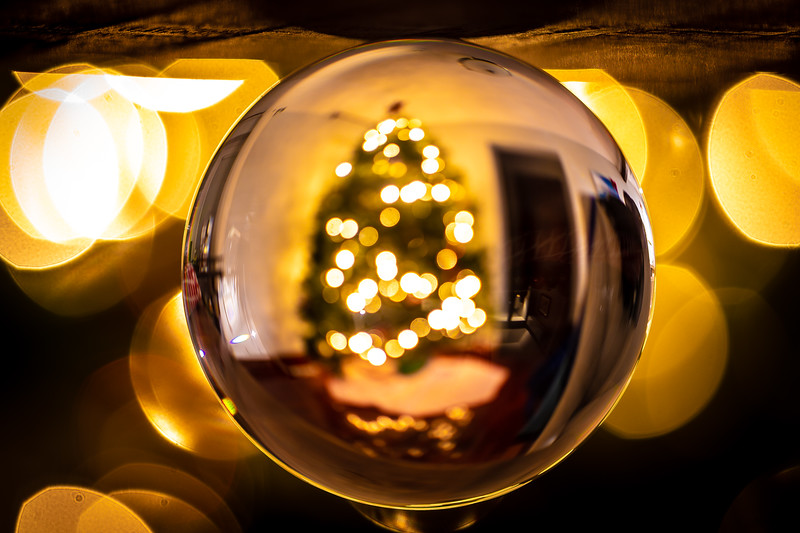 tree lens