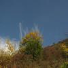 Заліщики 2008, вересень, 28. Нечесана змарина.