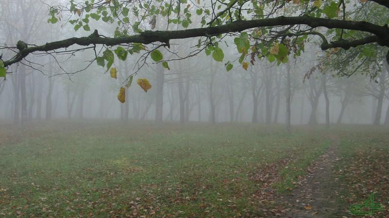 Заліщики 2012, жовтень, 5. Пізня осінь