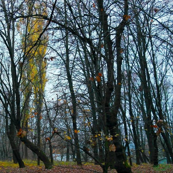 """Заліщики 2013, жовтень, 17.  Засинає """"верхній"""" парк"""